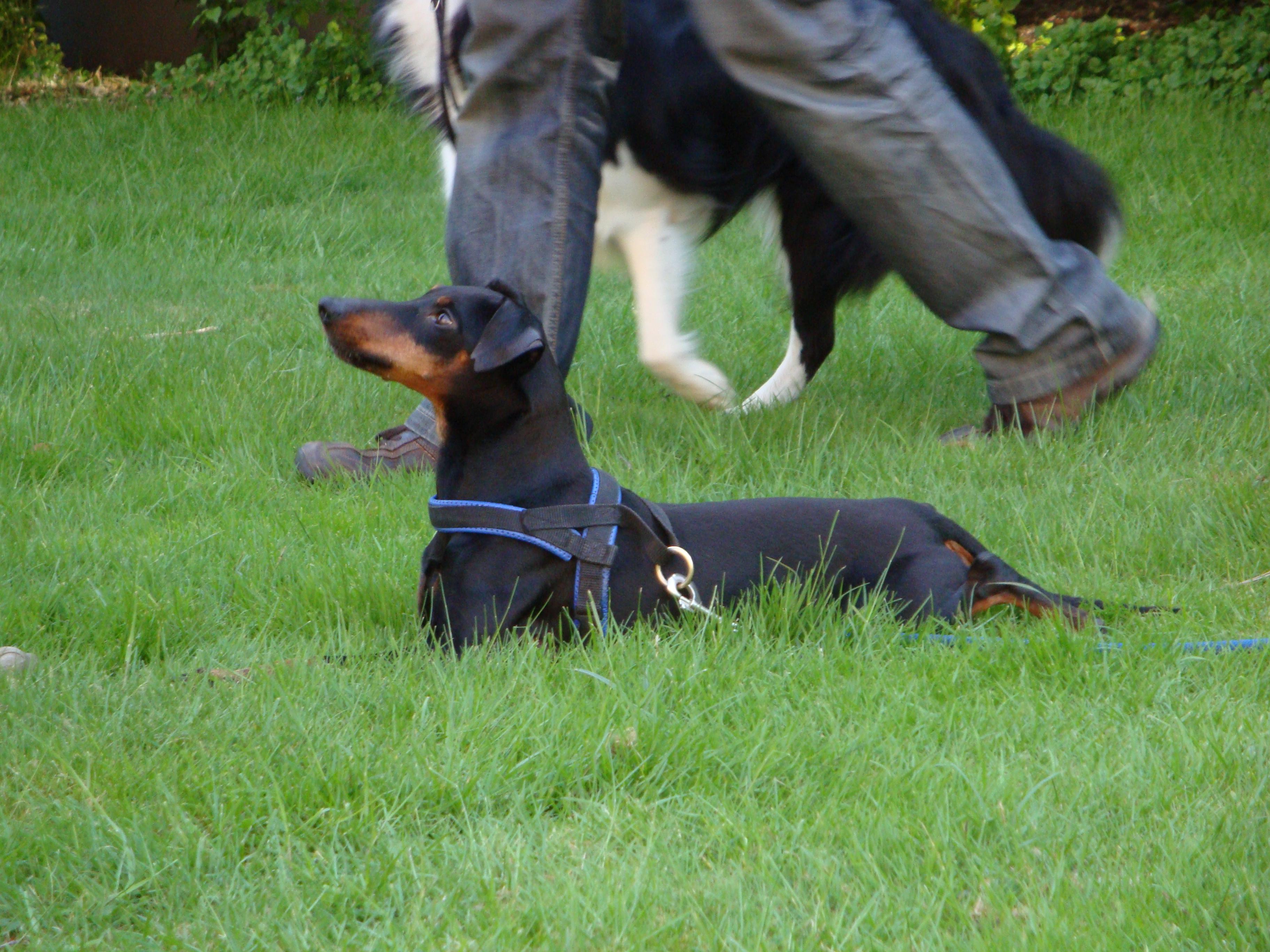 basis erziehung eines hundes