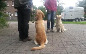 Luna und Lucca im Training