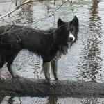 Hempy am Wasser