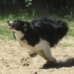 Hempy läuft beim Spielen